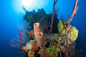 Grand Cayman Diving | Coral Fingers
