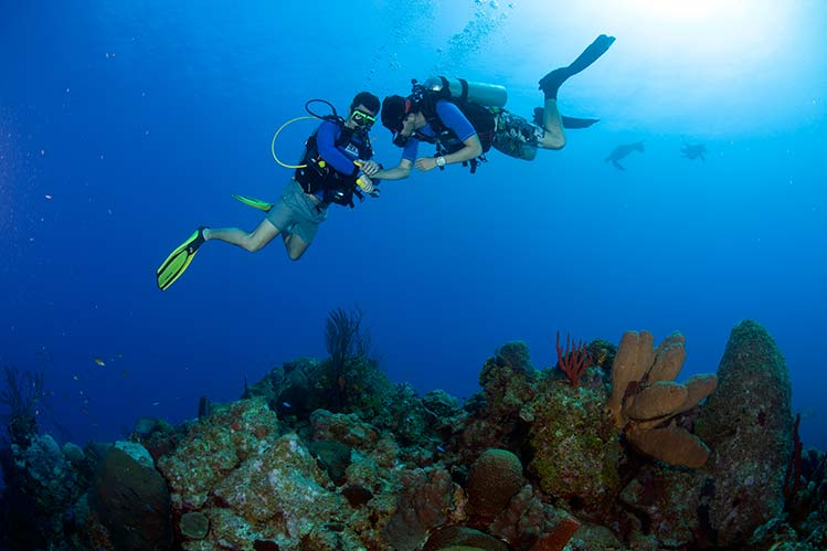 PADI Certifications | Cayman Islands